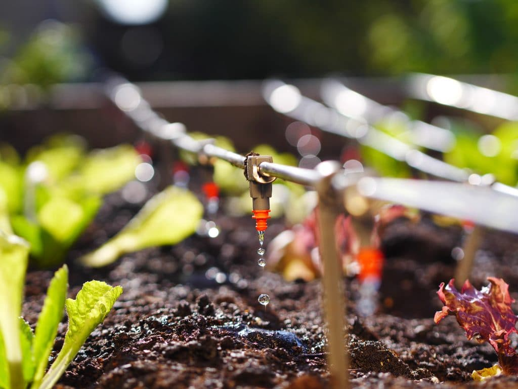 System kropelkowy (ang. Drip Irrigation System) w hydroponice